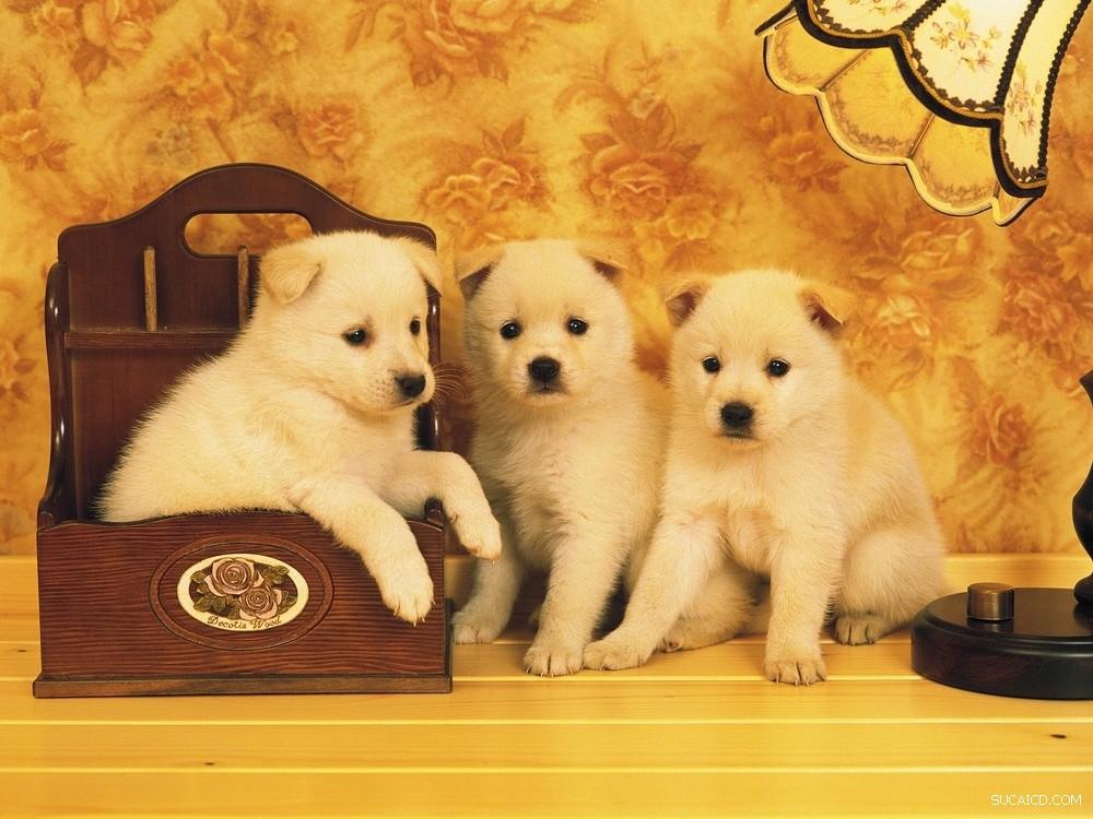 漂亮的可爱的好玩的狗狗