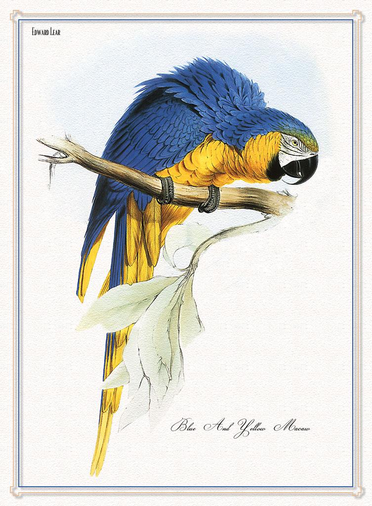 鹦鹉; 手绘鹦鹉动物手机壁纸集;;