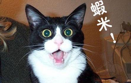 酷酷猫咪酷表情图片