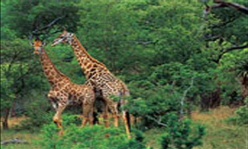 神奇的南非大自然                               最大的野生动物园
