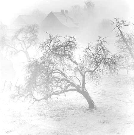 树(黑白照)