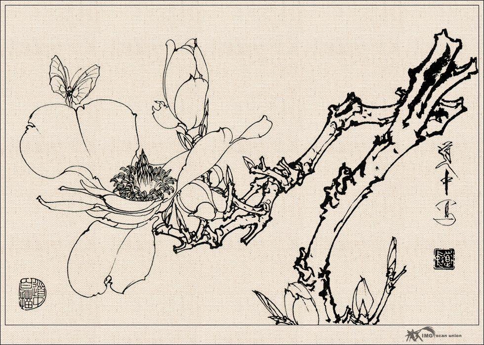 工笔画牡丹花白描 国画工笔牡丹花白描工笔牡丹白描稿图片